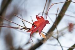 Herbst ist vorbei